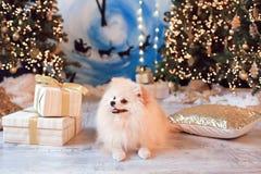 Leuk grappig hond het vieren Kerstmis en Nieuwjaar met decoratie en giften Chinees Jaar van de hond Royalty-vrije Stock Fotografie