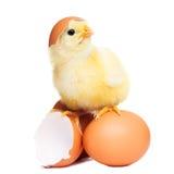 Leuk grappig Pasen-kuiken royalty-vrije stock afbeelding