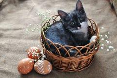 Leuk grijs weinig katje in een rieten mand en paaseieren van natuurlijke rode kleur met een grafisch patroon van witte verf in a stock fotografie