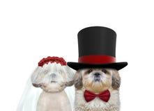 Leuk hond gelukkig huwelijk Op wit stock fotografie