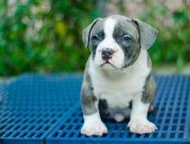 Leuk hond openluchtschot stock foto's