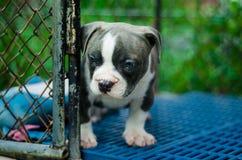 Leuk hond openluchtschot Royalty-vrije Stock Afbeeldingen