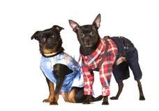 Leuk hondportret Stock Afbeeldingen