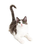 Leuk Jong Aandachtig Katje op Wit Stock Foto's