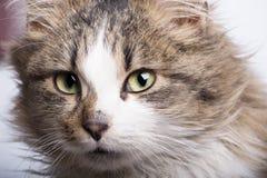 De kat van Nice Stock Foto's