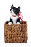 Leuk katje binnen doos stock foto