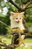 Leuk katje boom beklimmen en grappig mauwen die Stock Afbeeldingen