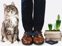 Leuk katje, bureaumanager en modieuze schoenen stock foto's