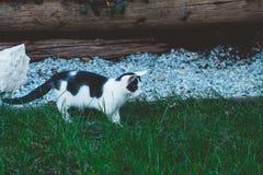 Leuk katje die in het gras onderzoeken royalty-vrije stock afbeelding