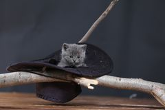 Leuk katje in een zwarte hoed royalty-vrije stock afbeeldingen