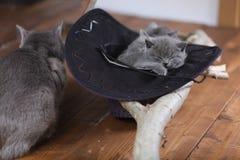 Leuk katje in een zwarte hoed stock foto's