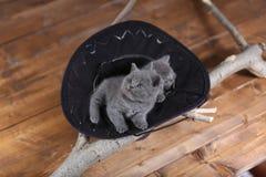 Leuk katje in een zwarte hoed royalty-vrije stock foto's