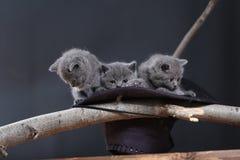 Leuk katje in een zwarte hoed royalty-vrije stock fotografie