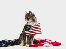 Leuk katje en Amerikaanse vlag De spruit van de studiofoto royalty-vrije stock foto's
