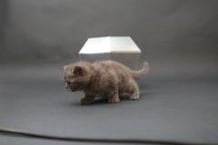 Leuk katje met een diamantstuk speelgoed Stock Fotografie