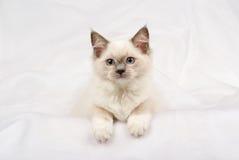 Leuk katje Ragdoll die op witte stof ligt Stock Fotografie