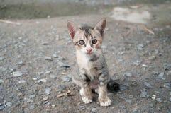 Leuk katje twee maanden oud Stock Foto