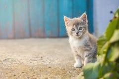 Leuk katje voor een blauwe deur royalty-vrije stock foto