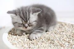 Leuk katje in zijn draagstoel stock foto's