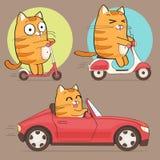 Leuk kattenkarakter Stock Afbeelding