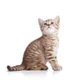 Leuk kattenkatje dat omhoog op witte achtergrond kijkt Royalty-vrije Stock Afbeeldingen