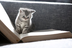 Leuk klein katje Stock Foto