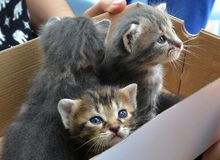 Leuk klein pluizig pasgeboren katje drie Stock Fotografie