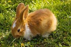 Leuk konijn royalty-vrije stock fotografie