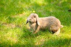 Leuk konijn Royalty-vrije Stock Afbeeldingen