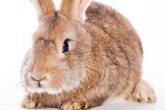 Leuk konijn Royalty-vrije Stock Foto's