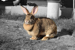 Leuk konijn Royalty-vrije Stock Afbeelding