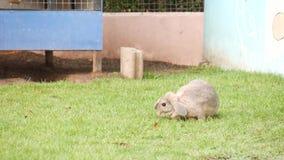 Leuk konijn die gras met vogel het tjilpen geluid op achtergrond eten stock footage