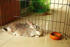 Leuk konijn in kooiscène Stock Foto's