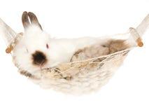 Leuk konijntje binnen witte hangmat royalty-vrije stock afbeelding