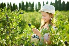 Leuk meisje die verse bessen op organisch bosbessenlandbouwbedrijf plukken op warme en zonnige de zomerdag Verse gezonde natuurvo stock fotografie
