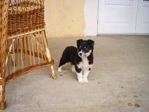 Leuk merkwaardig eruit ziet weinig puppy royalty-vrije stock foto's