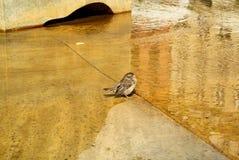 Leuk neemt weinig mus een bad in een stadsfontein stock afbeeldingen
