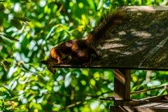 Leuk nieuwsgierig eekhoorndier royalty-vrije stock foto
