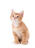 Leuk oranje katje met grote poten die omhoog eruit zien stock fotografie