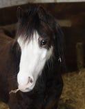 Leuk paard Royalty-vrije Stock Fotografie