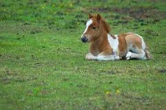 Leuk paard in het gras royalty-vrije stock fotografie