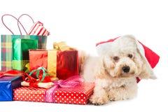 Leuk poedelpuppy in Kerstmankostuum met overvloedige Kerstmisgiften Stock Afbeeldingen