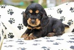 Leuk puppy Royalty-vrije Stock Fotografie