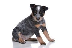 Leuk Puppy Stock Fotografie