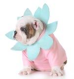 Leuk Puppy Stock Foto