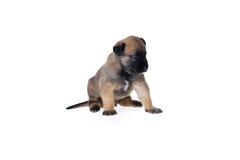 Leuk Puppy Stock Foto's