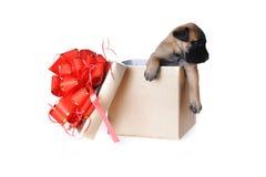 Leuk Puppy Royalty-vrije Stock Foto's