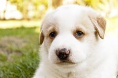 Leuk Puppy dat Camera onder ogen ziet Stock Foto's