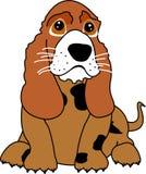 Leuk puppy dat met zijn ogen pleit Stock Foto's