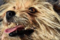 Leuk Puppy die op Voedsel wachten royalty-vrije stock foto's